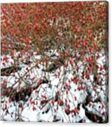 Winter Harvest 2 Canvas Print