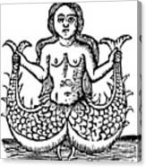 Mermaid, 1520 Canvas Print