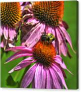 01 Bee And Echinacea Canvas Print