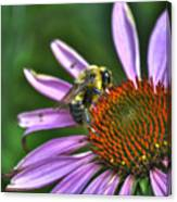 02 Bee And Echinacea Canvas Print