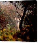 070406-65 Canvas Print