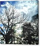 09032015039 Canvas Print