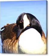 0932 - Canada Goose Canvas Print