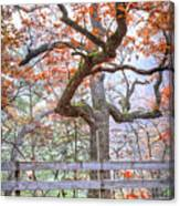 0981 Fall Colors At Starved Rock State Park Canvas Print