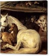 10234 Edwin Henry Landseer Canvas Print