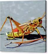 15- Lubber Grasshopper Canvas Print