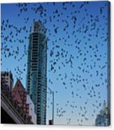 1.5 Million Mexican Free-tail Bats Overtake The Austin Skyline As They Exit The Congress Avenue Bridge Canvas Print