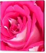 Bara Means Rose Canvas Print