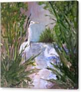 2 Herons In Hiding Canvas Print