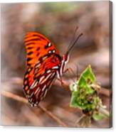 4534 - Butterfly Canvas Print
