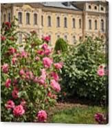 A Beautiful Rose Bush Castle Park 1 Canvas Print