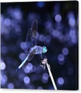 A Dragonfly Canvas Print