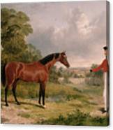 A Horse And A Soldier Canvas Print