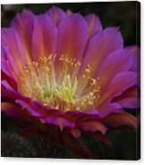 A Passion For Pink  Canvas Print