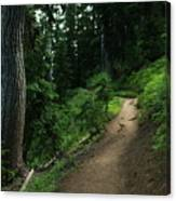 A Path In Paradise Canvas Print