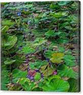 A Pretty Pond Full Of Lily Pads At A Water Temple In Bali. Canvas Print