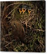 A Visit To The Nest Canvas Print
