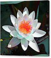 Abstract Waterlily Canvas Print
