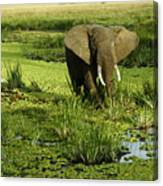 African Elephant In Swamp Canvas Print
