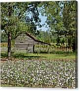 Alabama Cotton Field Canvas Print