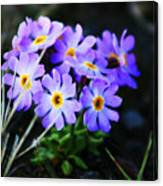Alaskan Wild Flowers Canvas Print