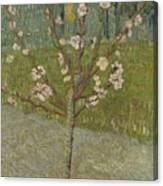 Almond Tree In Blossom Arles, April 1888 Vincent Van Gogh 1853 - 1890 Canvas Print