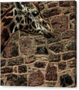 Amazing Optical Illusion - Can You Find The Giraffe Canvas Print
