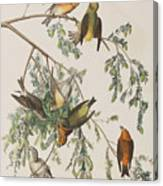 American Crossbill Canvas Print