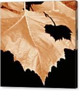 American Sycamore Leaf And Leaf Shadow Canvas Print