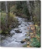 An Autumn Stream Canvas Print
