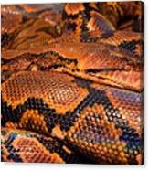 Anaconda Canvas Print