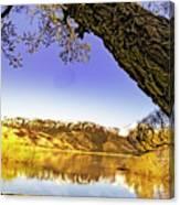 Ancient Trees Canvas Print