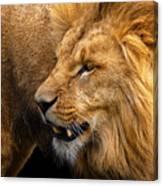 Angolian Lion Canvas Print