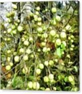 Apple Tree Canvas Print