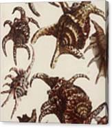 Aquatic Animals - Conch - Shells - Snails Canvas Print
