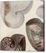 Aquatic Animals - Sea - Shells - Composition - Alien - Wall Art  - Interior Decoration  Canvas Print