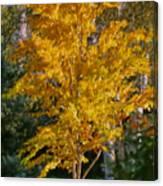 Artistic Fall Colours Canvas Print
