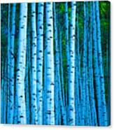 Aspen Aspens Canvas Print