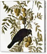 Audubon: Crow Canvas Print