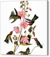 Audubon: Hummingbird Canvas Print
