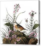 Audubon: Sparrow, (1827-38) Canvas Print
