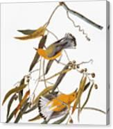 Audubon: Warbler Canvas Print