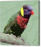 Australian Lorikeet Canvas Print
