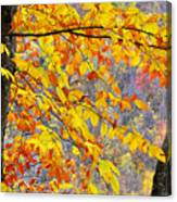 Autumn Beech Leaves Canvas Print