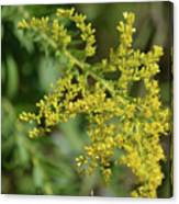 Autumn Goldenrod  Canvas Print