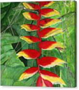 Balinese Heliconia Rostrata Canvas Print