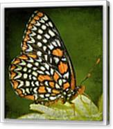 Baltimore Checkerspot Canvas Print