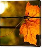 Barbed Autumn Canvas Print