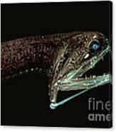 Barbeled Dragonfish Canvas Print