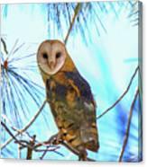 Barn Owl Beauty Canvas Print